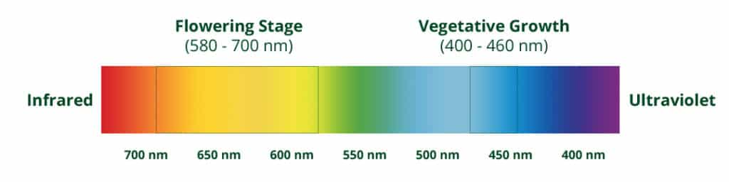 UV spectrum for cannabis